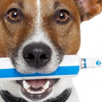 Anesthesia-free dental cleaning