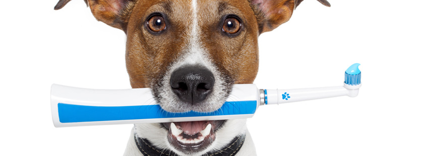 Pet Junction Grooming - Anesthesia-free dental cleaning