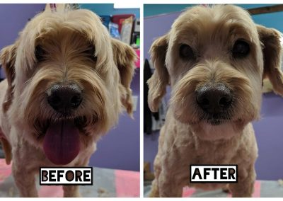 Before and After of Small Happy Handsome Dog