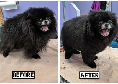 Before and After of Small Black Dog with White Muzzle