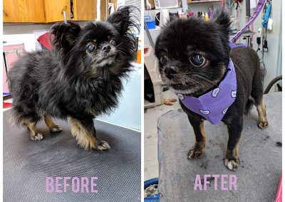 Before and After Photo of Small Black and Brown Dog