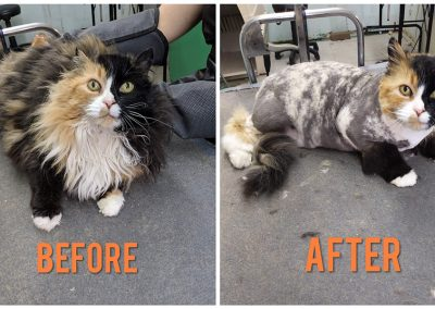 Before and After Photo of Cat After Grooming