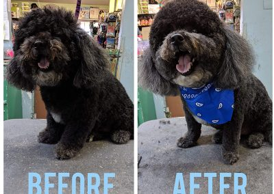 Before and After Photo of Cute Little Dog