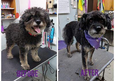 Before and After Photo of Dog After Grooming - Looks So Different!